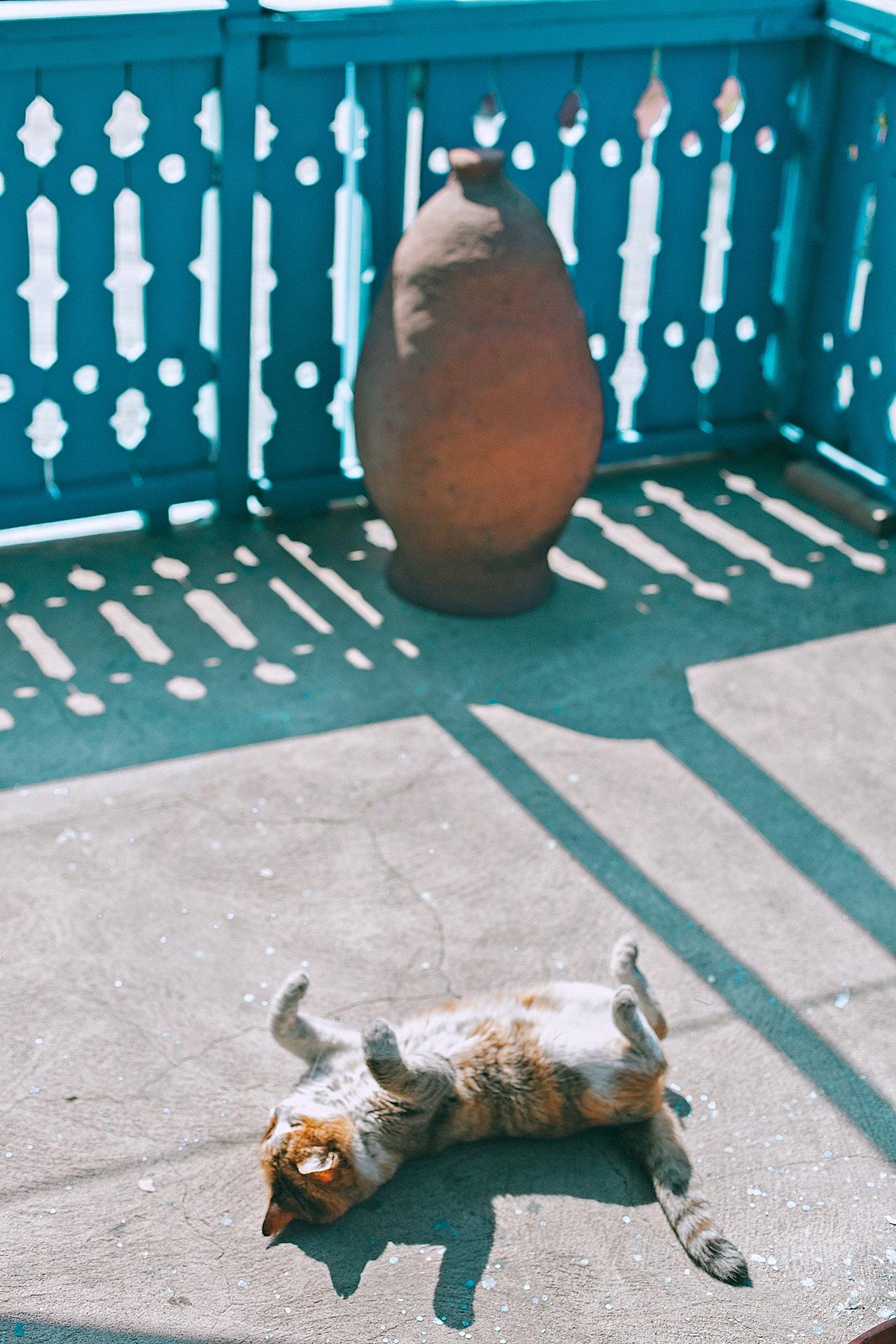 pelo-gatto
