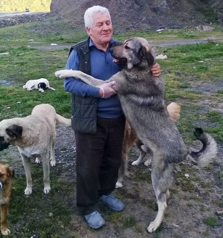 I cani di Fevzi Uyar