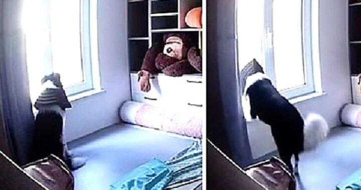 Donna scopre cosa fa il suo cane Pi Dan, durante le ore in cui è fuori per lavoro
