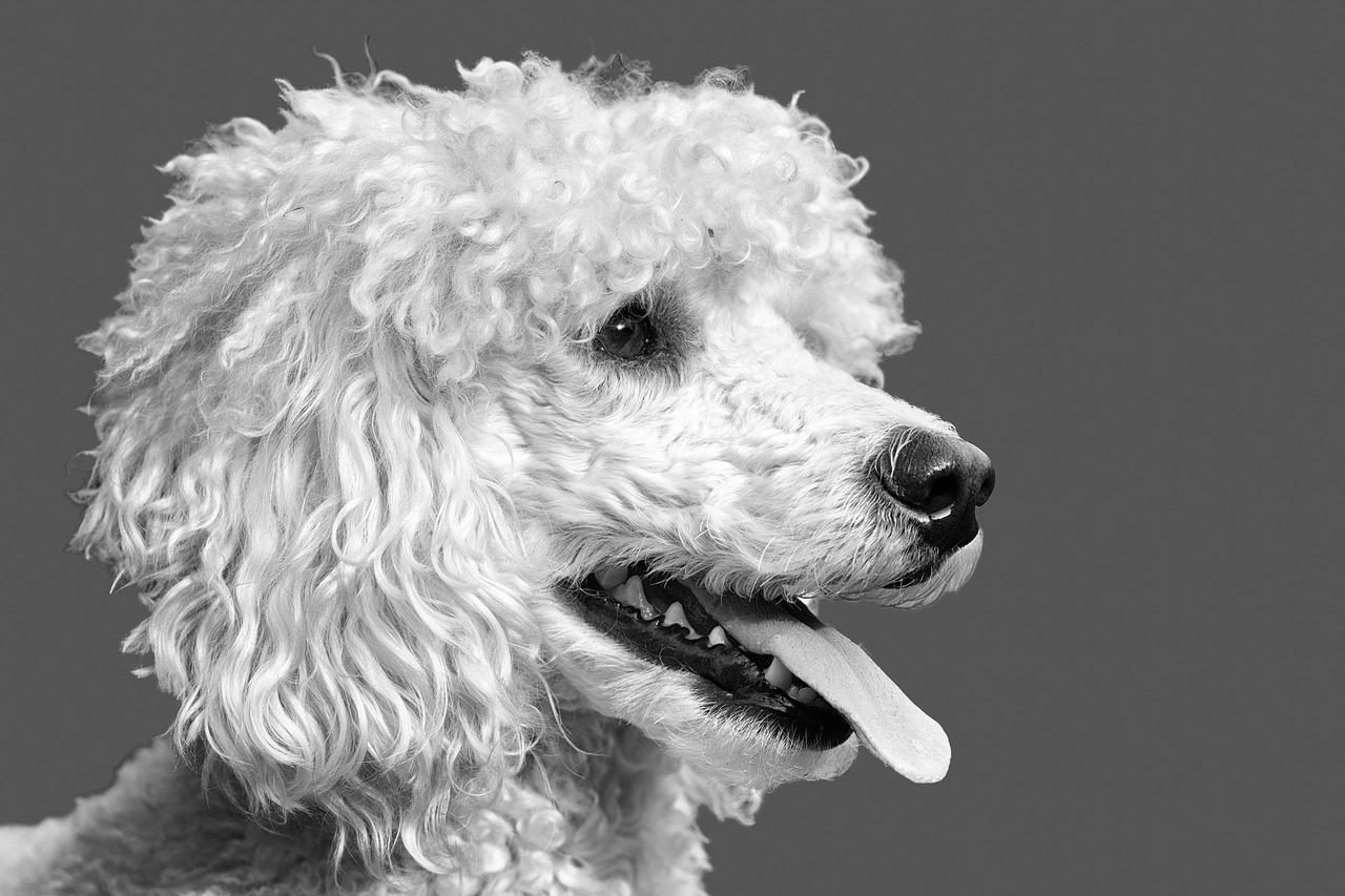 Proprietario di cane arrestato per abbandono