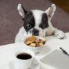 quanto-cibo-dare-al-cane -