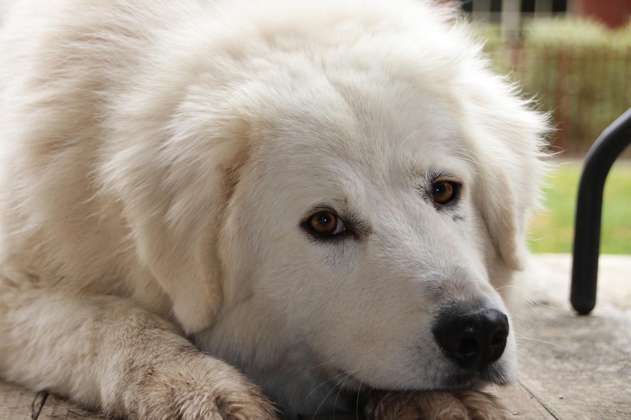 Cucciolo adottato in canile