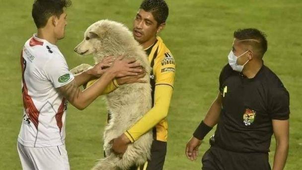Cucciolo invade il campo di gioco