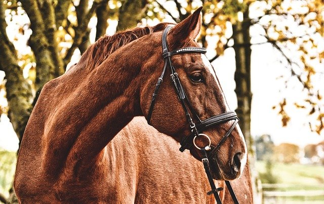 scegliere equitazione benefici