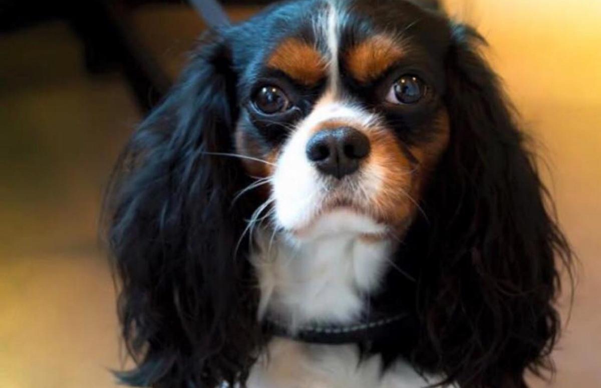 Il cane di Selvaggia Lucarelli non sta bene