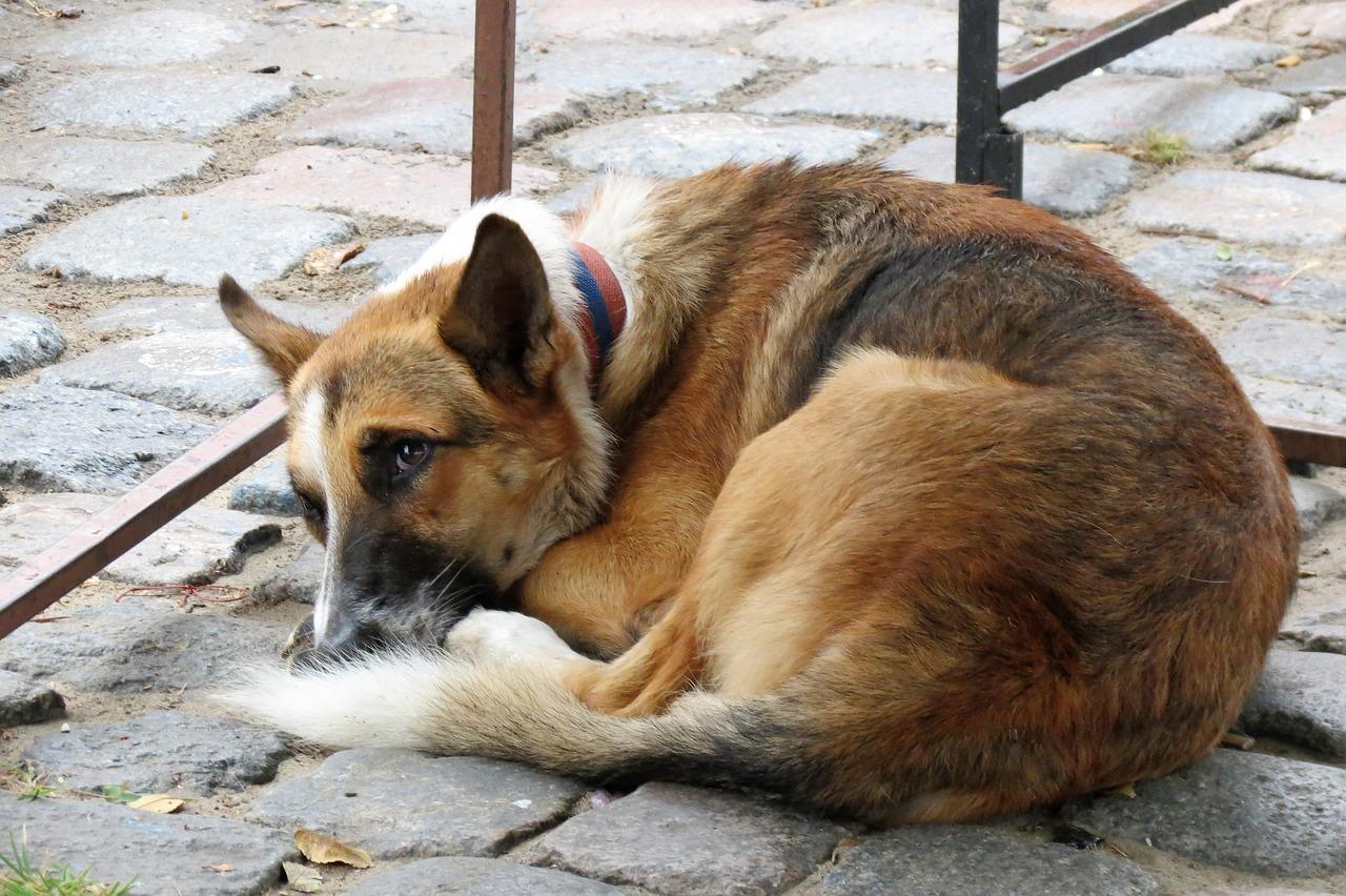 Senzatetto nutre i cani randagi