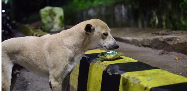I cani aiutati da Kamala Lochan Baliarsingh