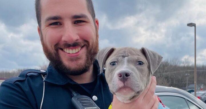 Poliziotto interviene per salvare un cane ferito, ma poco dopo prende una decisione improvvisa