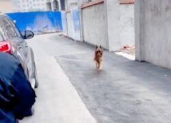 Il video di Wangwang