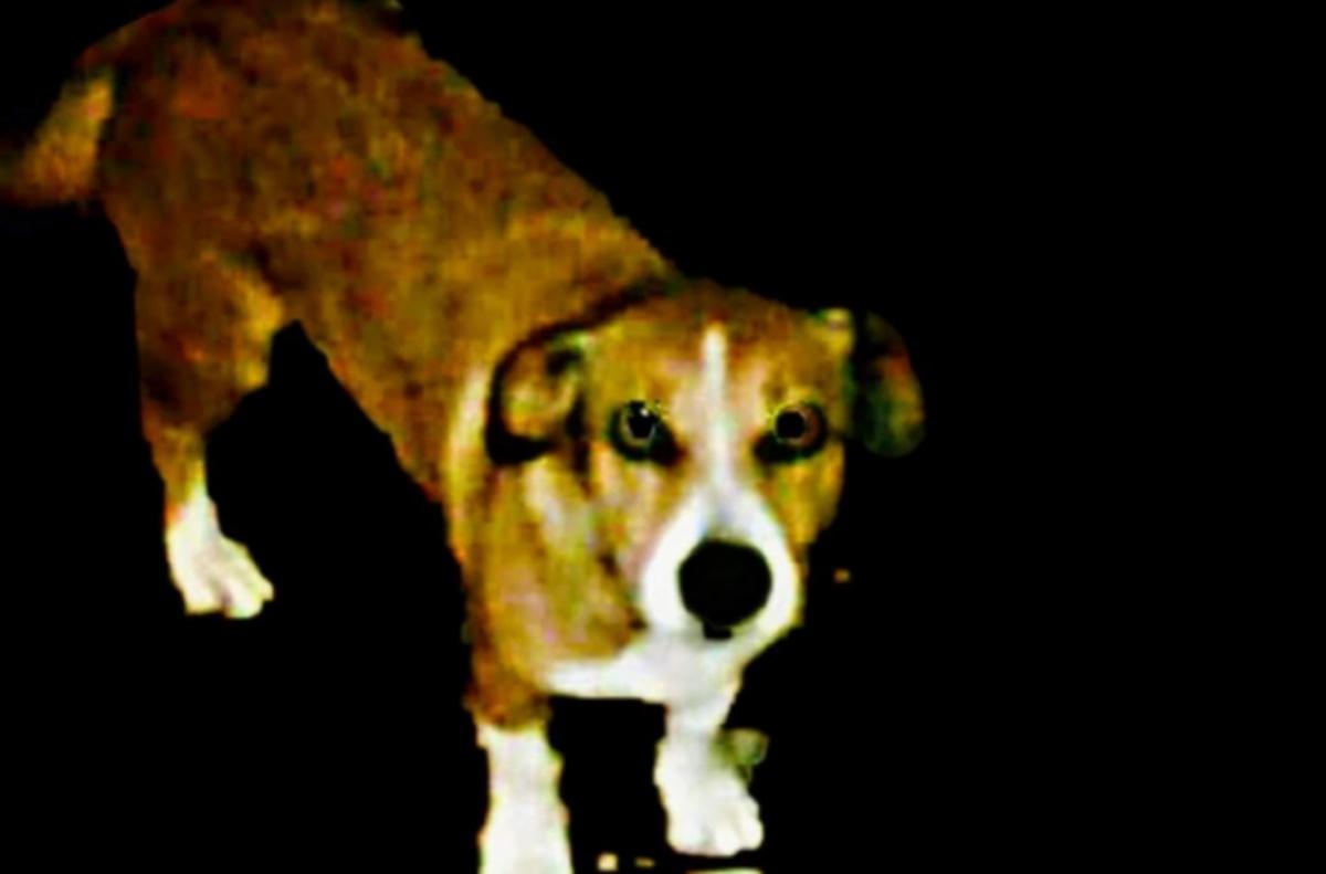 Morte cane Zeus: condannato 30enne