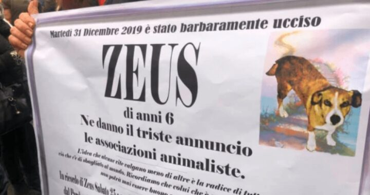 Ricordate il cane Zeus? Ucciso da un ragazzo di 30 anni a Modena? È arrivata la condanna definitiva