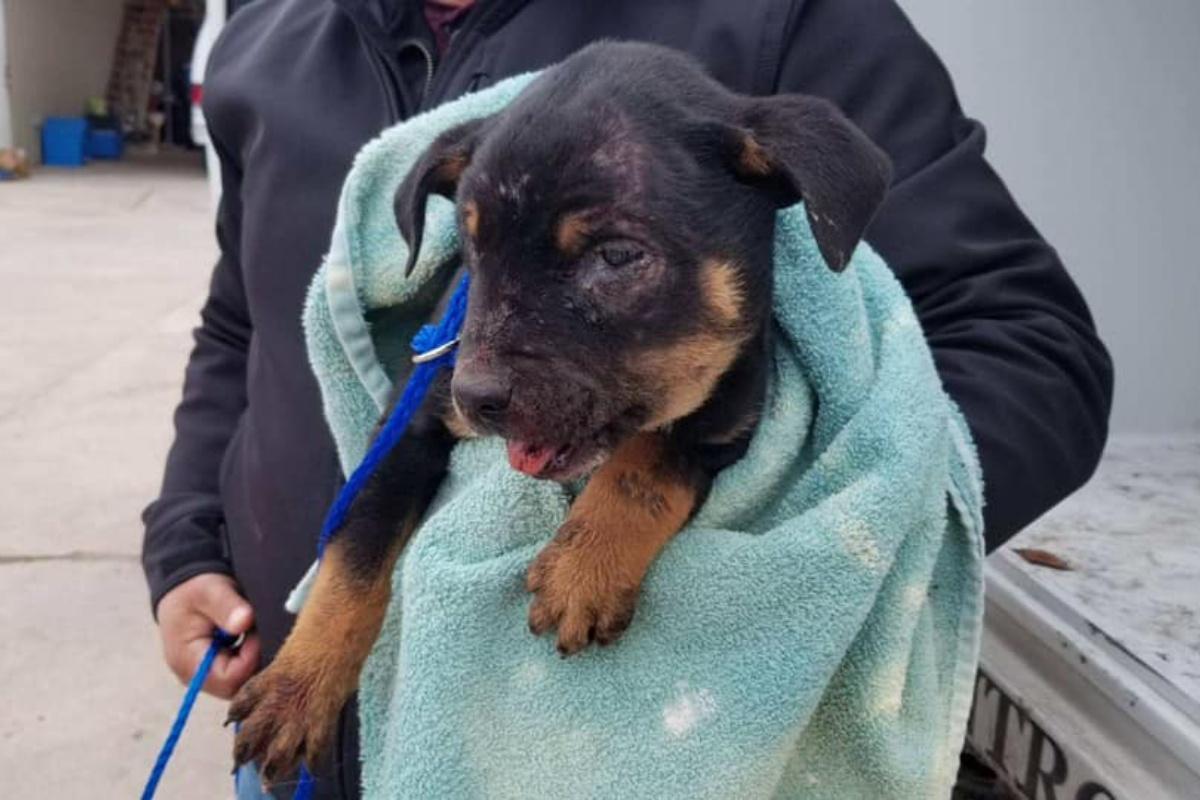 8 cani salvati