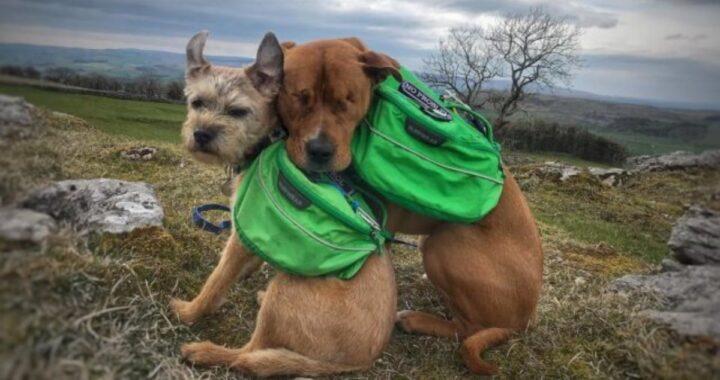 Cane cieco dalla nascita, trova la sua guida in un nuovo amico speciale