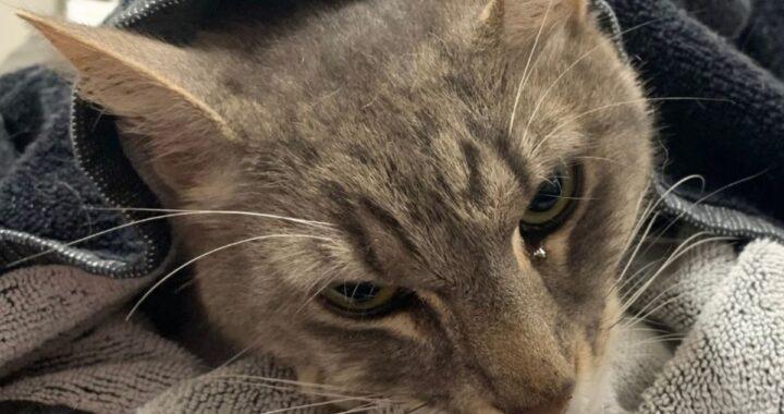 Arthur: gatto muore per salvare due bambini