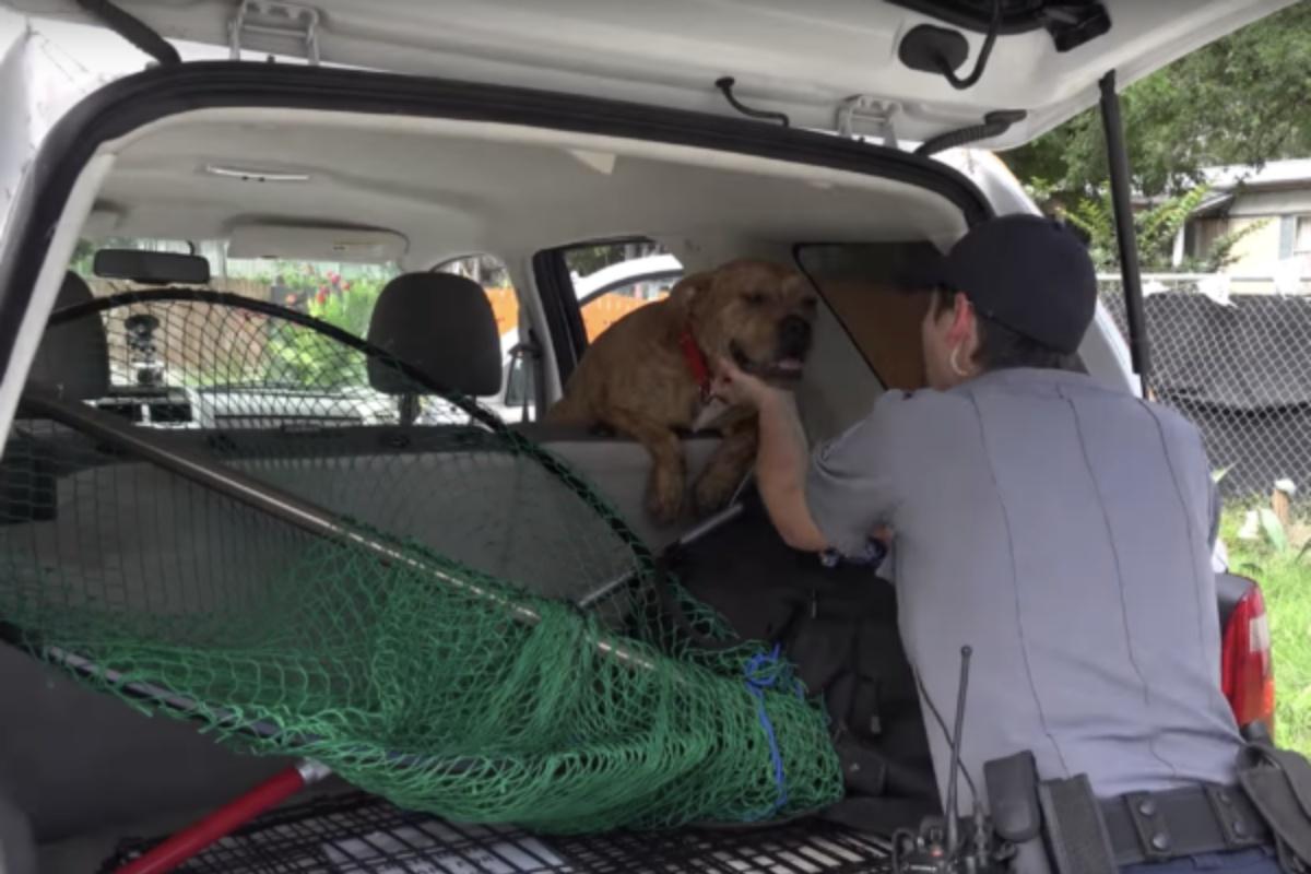 Cane sale sulla macchina della Austin Animal Shelter