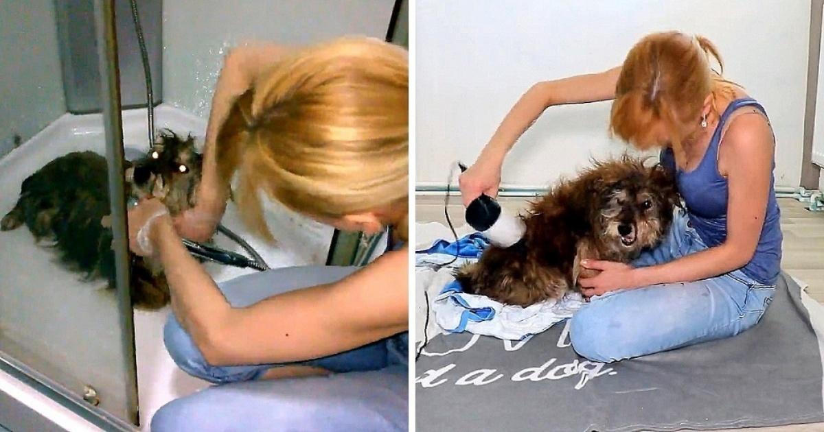 Una donna trova un cane sporco e decide di rimetterlo a nuovo