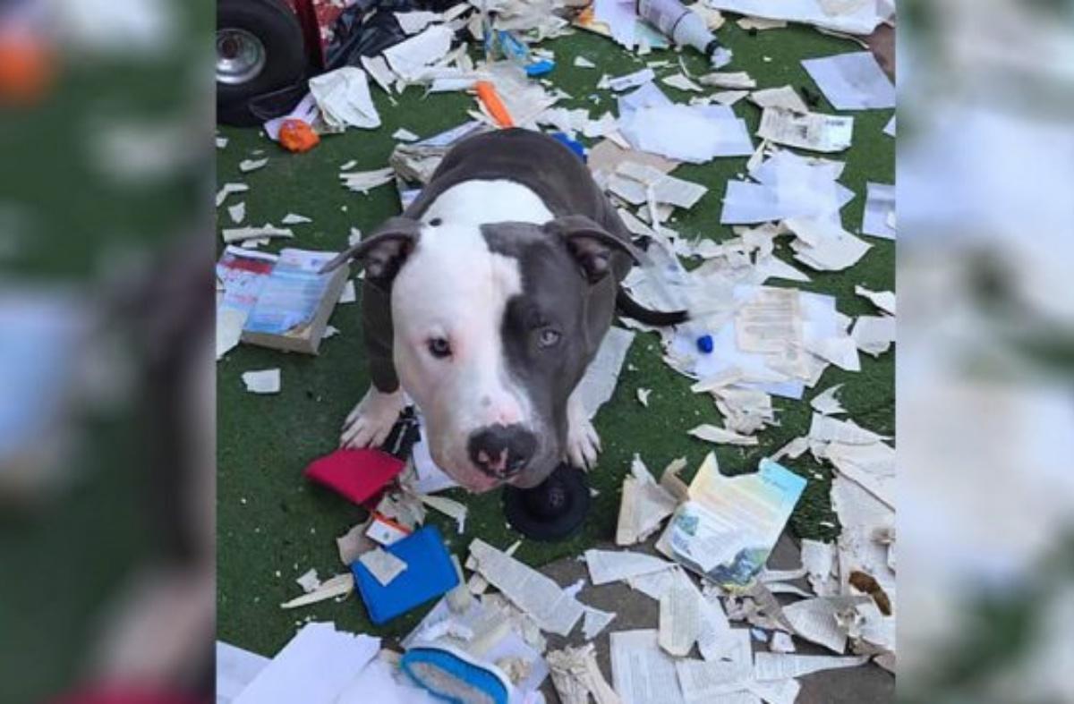 Dallas, il cane combina guai