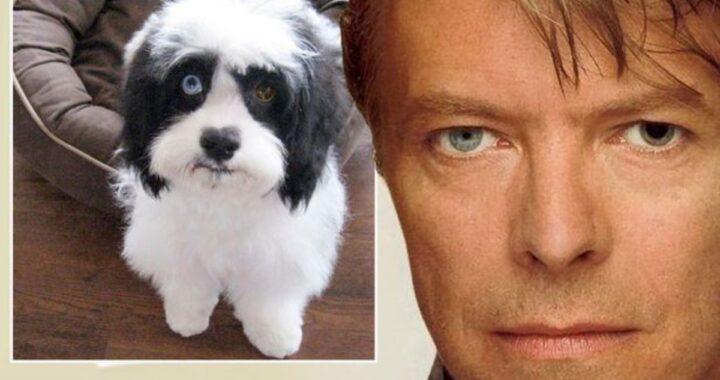 È morto Max, il cane di David Bowie