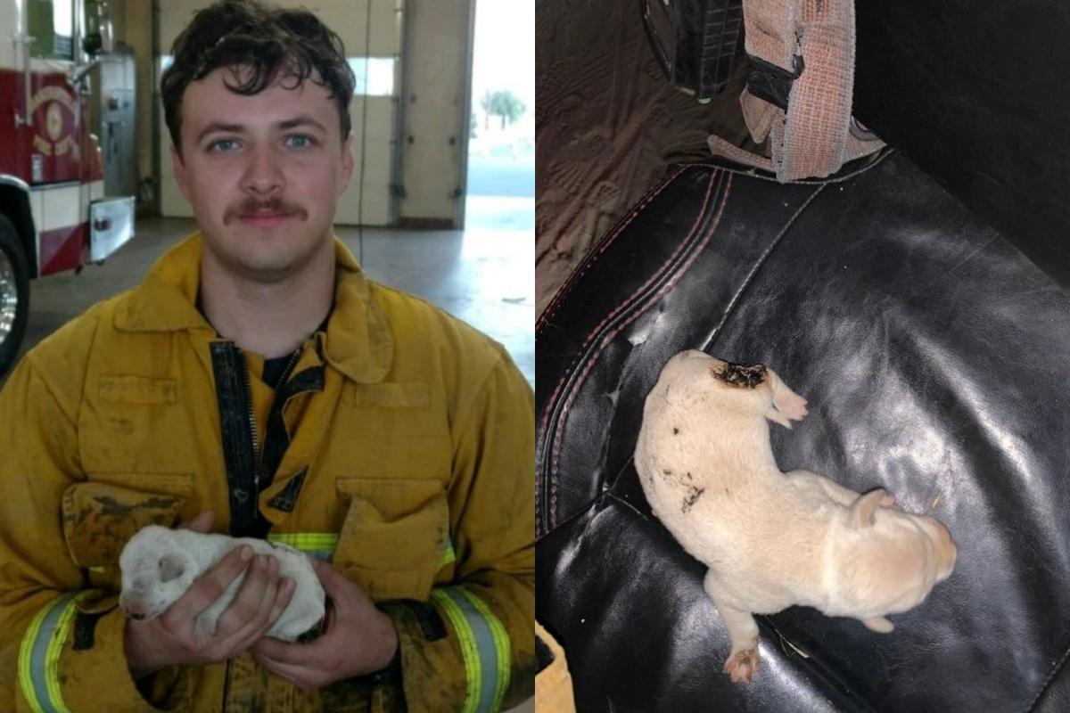 Fuego, il cagnolino salvato da un incendio