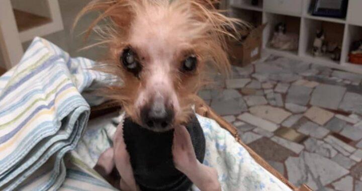 Cucciolo di 10 anni, portato per l'eutanasia dal veterinario che non se la sente e chiede aiuto a una volontaria: la storia di Holly
