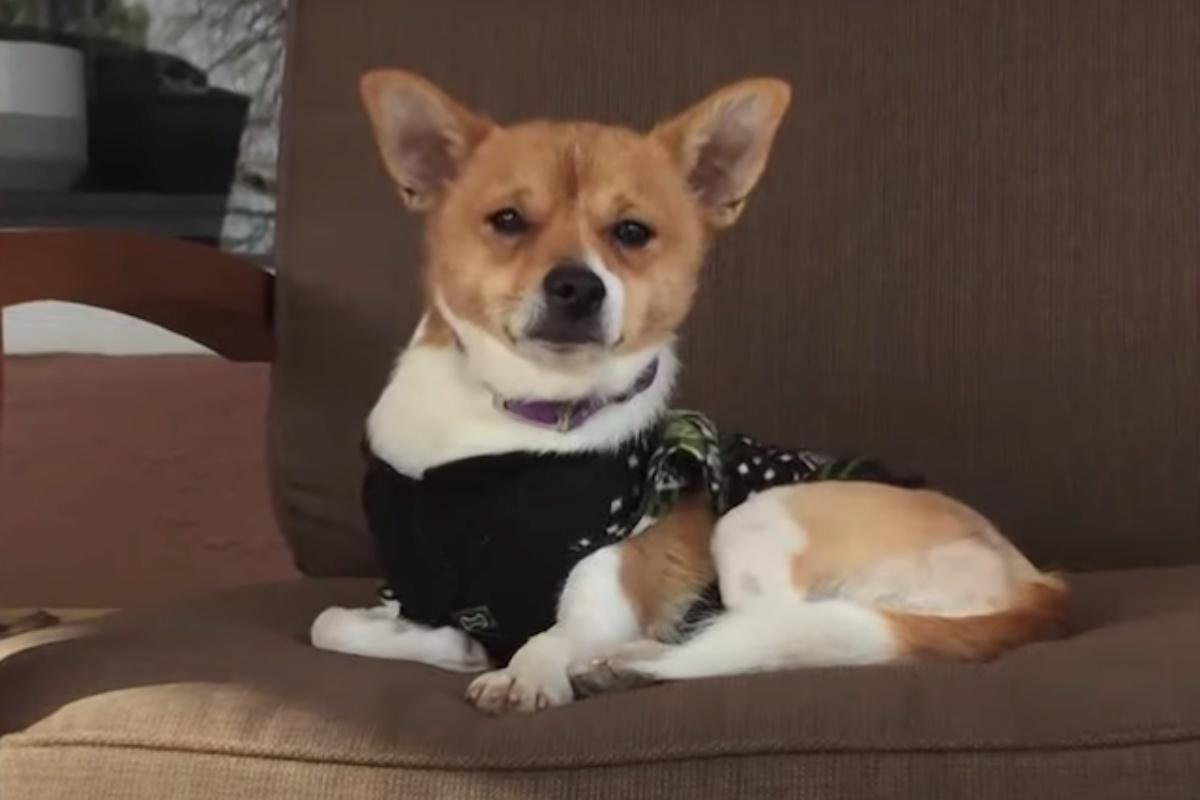 Jim, il cagnolino con il bacino spezzato