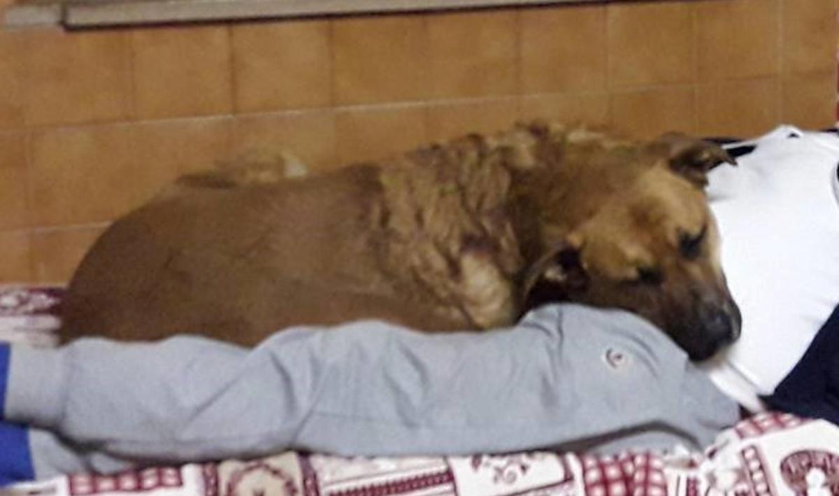 La commovente foto del cane Ken