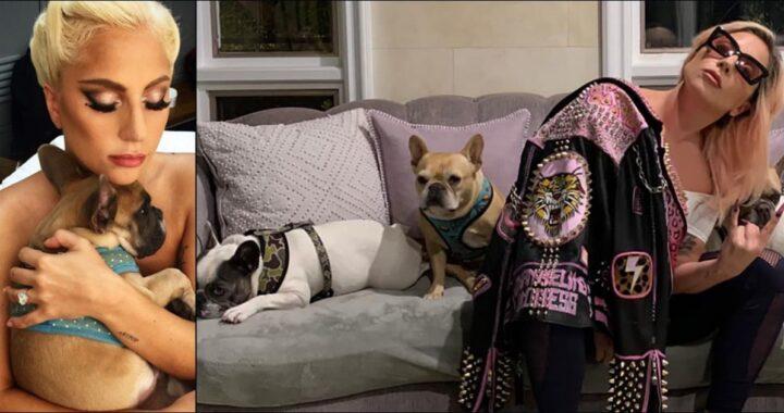 Dog-sitter in ospedale in gravi condizioni, rapiti i cani di Lady Gaga: la cantante offre una stratosferica ricompensa