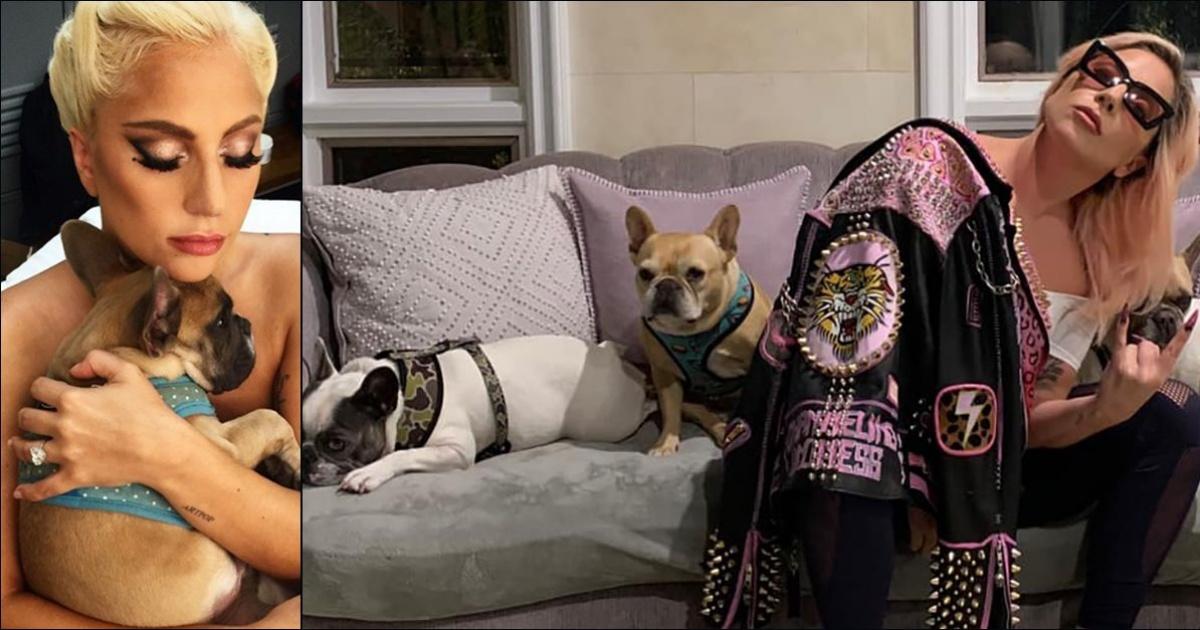 La ricompensa di Lady Gaga per i suoi cani