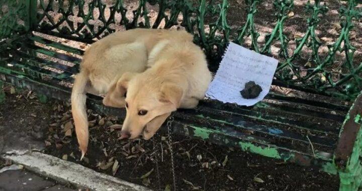 Vi ricordate di Max? Il cane lasciato su una panchina con quella straziante lettera di un bambino? Ecco che fine ha fatto
