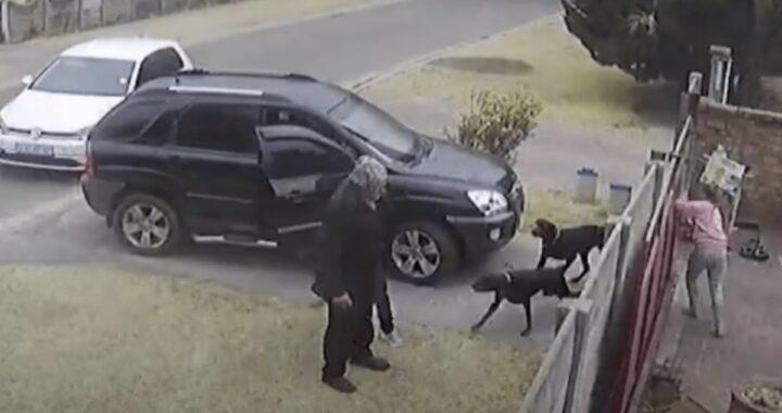 Ladri puntano una pistola alla testa del suo papà: la reazione di questo cane ha commosso il web