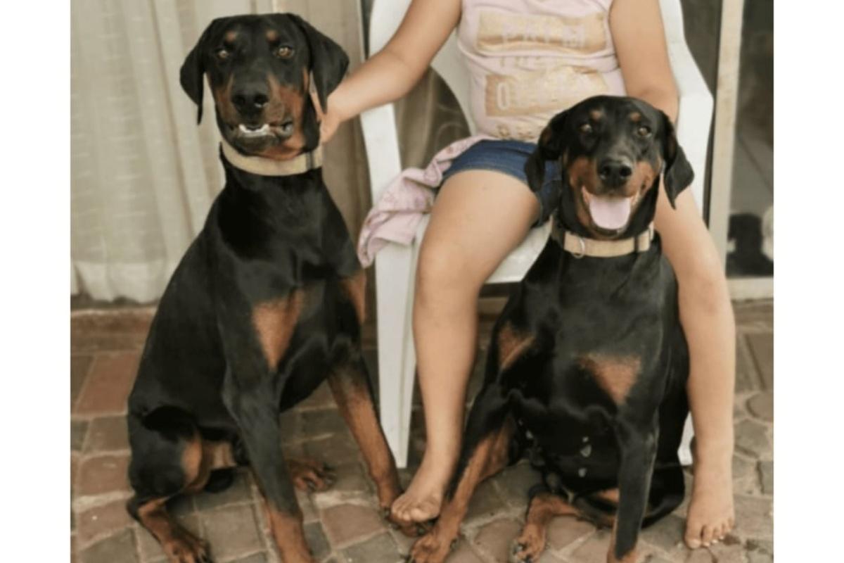 Il cane Niki salva la vita al suo padroncino