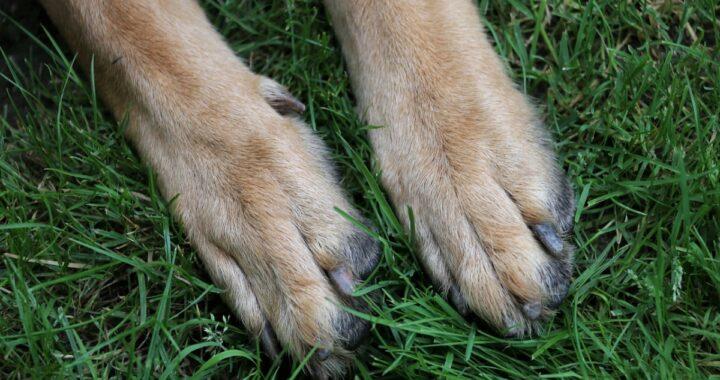 Accusa un malore per strada: il cane Poldo sveglia i residenti