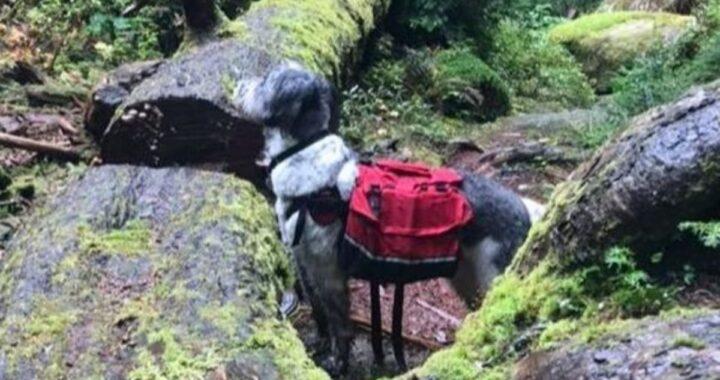 Il meraviglioso salvataggio ad opera del cagnolino Raley