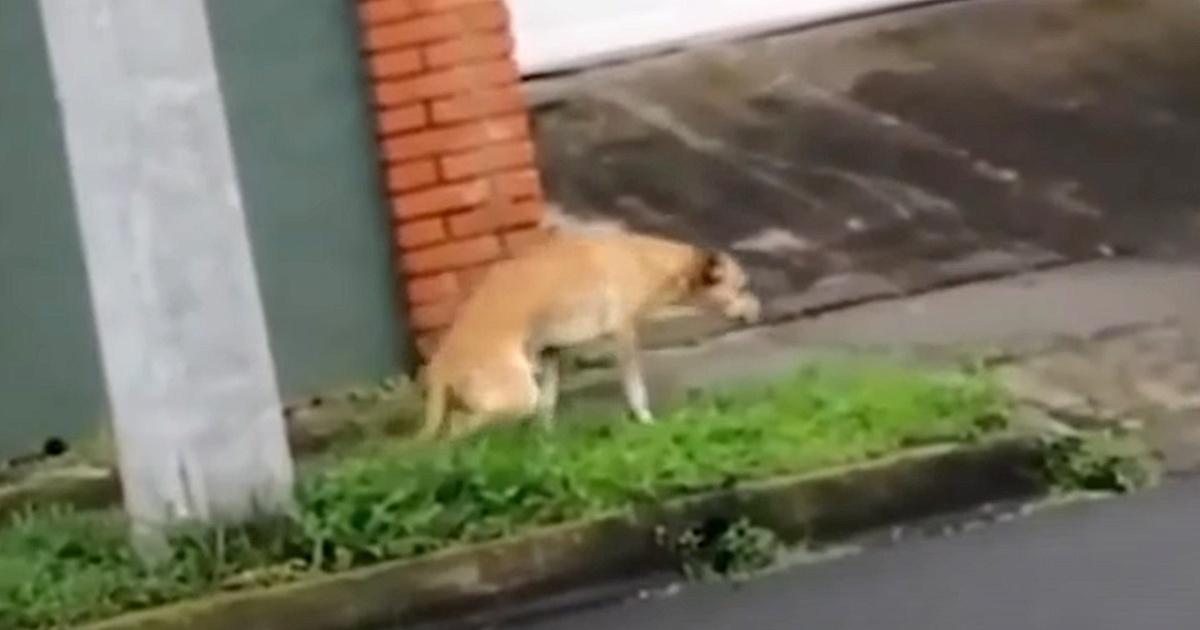 Il salvataggio del cane Rosco