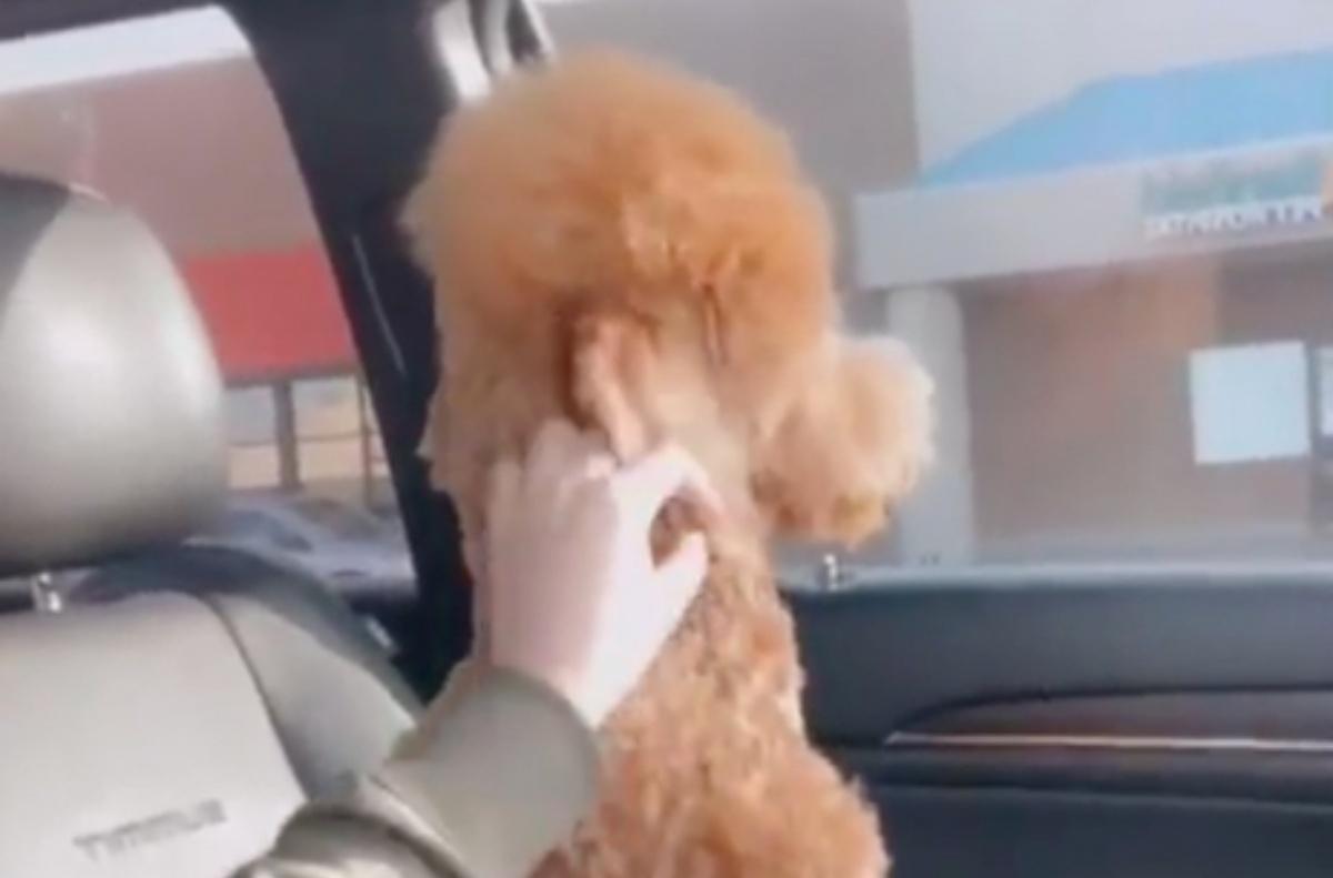 Il video del cane Roxy