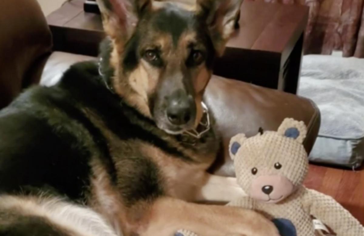 Sadie, la cagnolina che salva la vita del suo papà