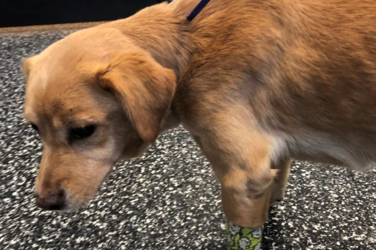Suzy, la cagnolina trova famiglia per caso