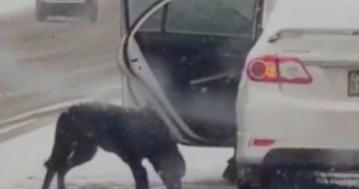 """""""Stava congelando, eppure non voleva salire sulla mia auto. Così ho dovuto escogitare un piano"""""""