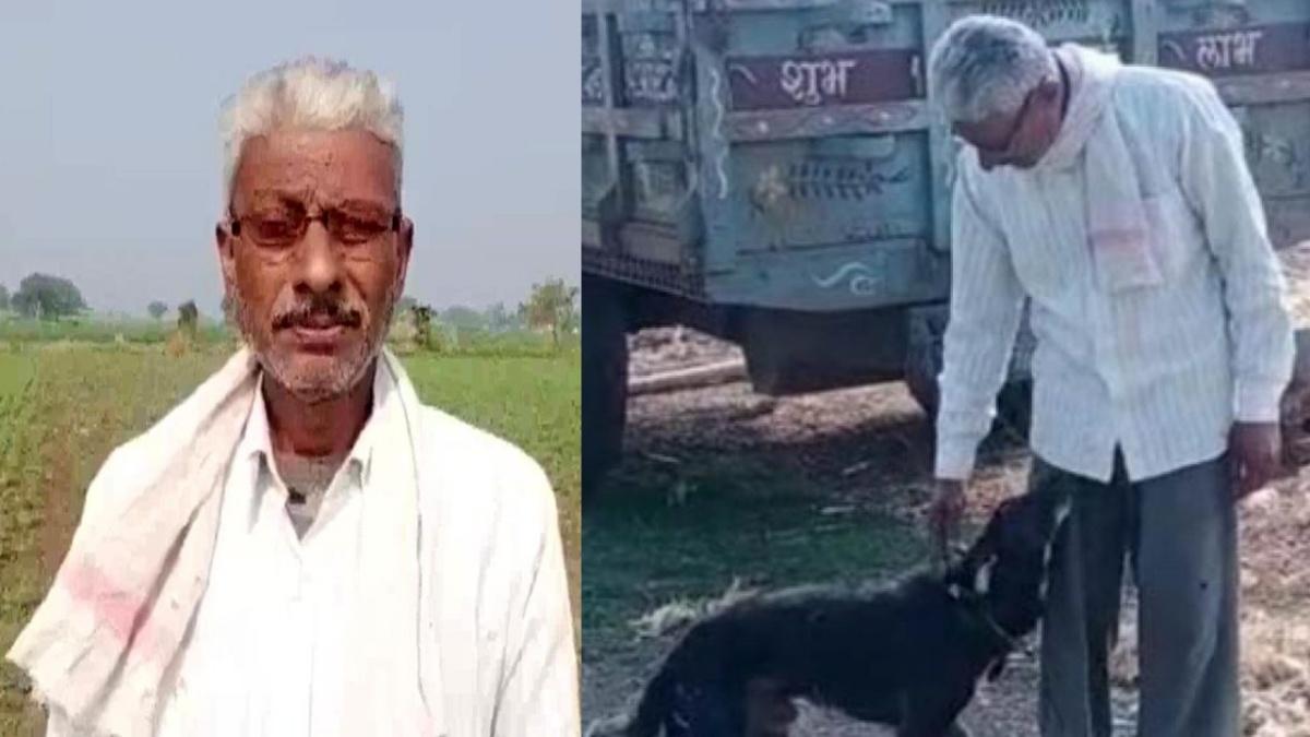 Agricoltore decide di lasciare la sua eredità al cane