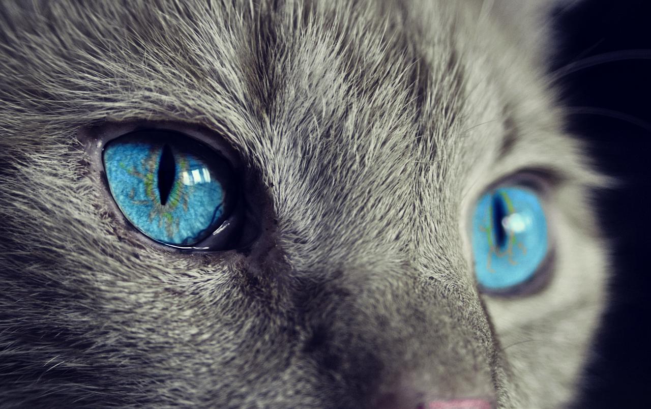 Aiuta più di 300 gatti infreddoliti