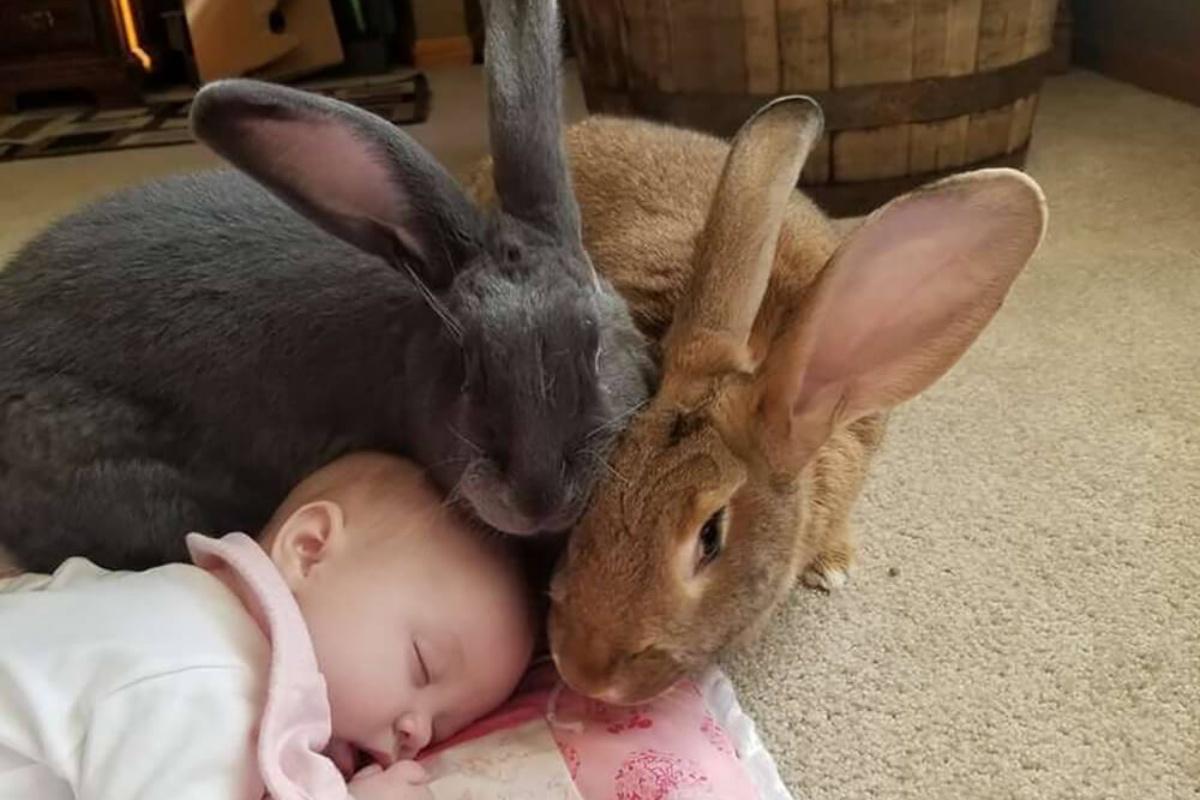 alfie e amelia bambina