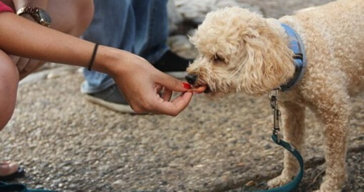 Attenzione ai proprietari di animali domestici. Sapevate che c'è un alimento potenzialmente pericoloso sia per i cani che per i gatti? Di cosa si tratta