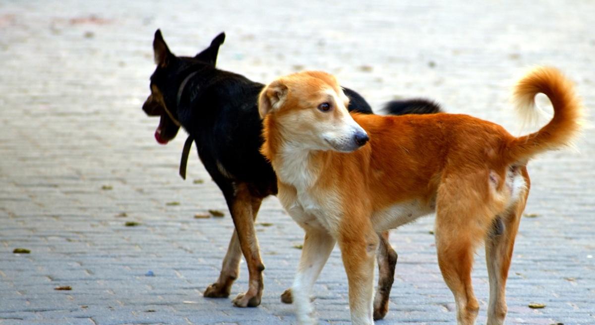 Cani randagi aggrediscono una bambina di 7 anni