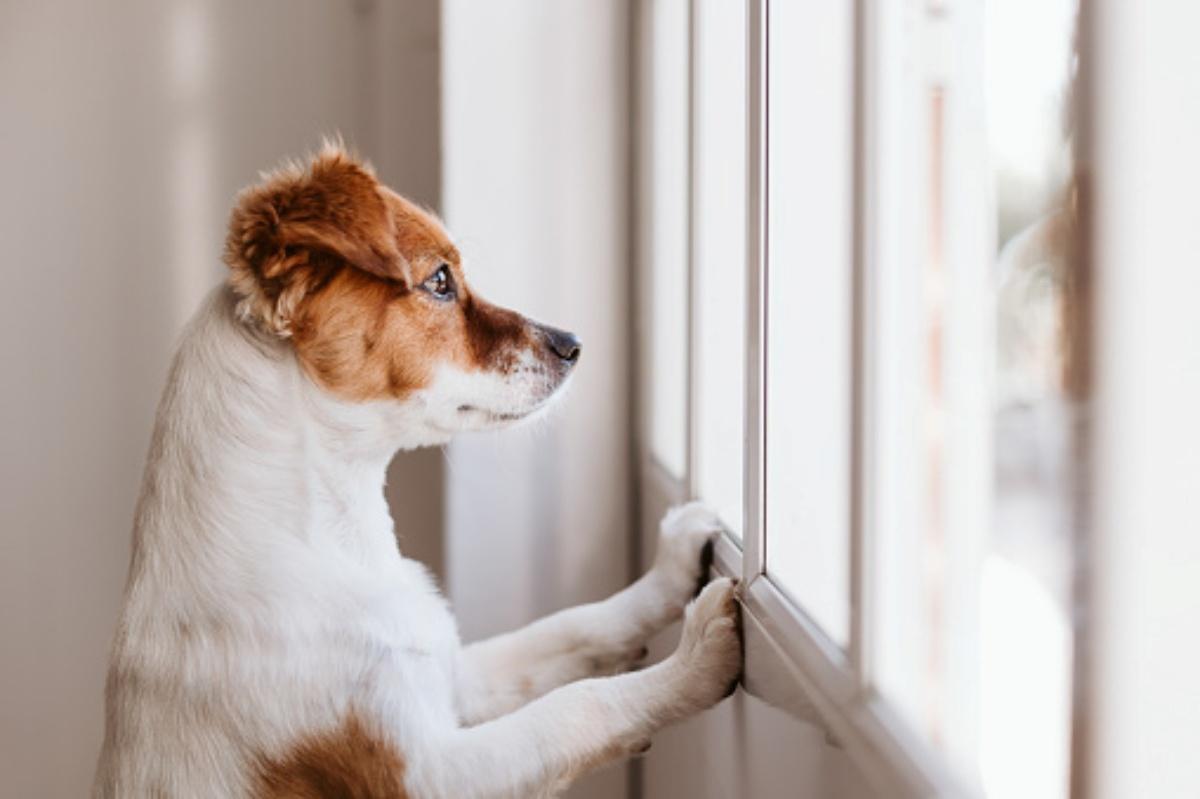 Billy aspetta il proprietario davanti la porta