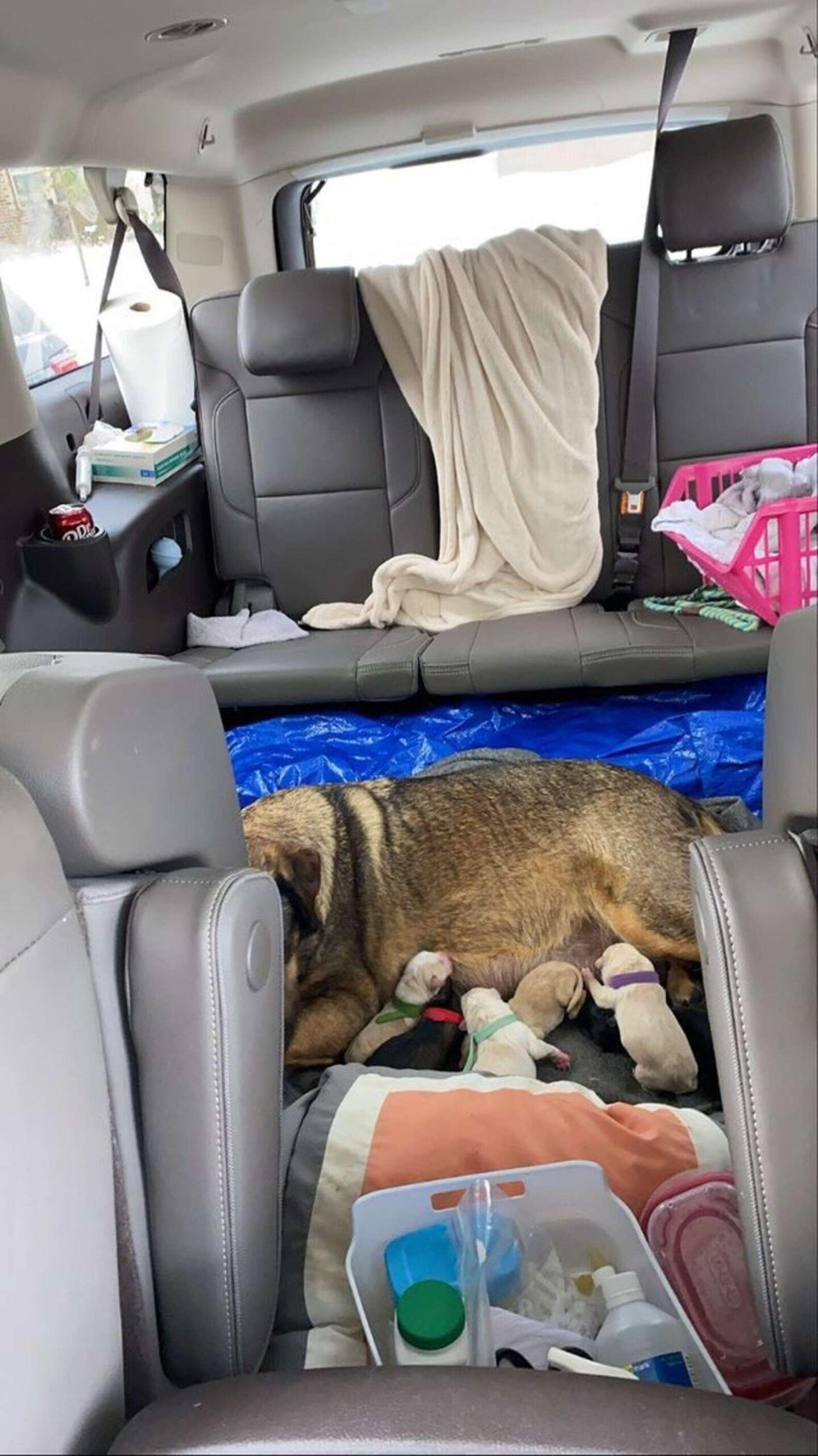 Maggie partorisce in auto