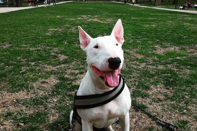 Billy il cucciolo a cui hanno sparato