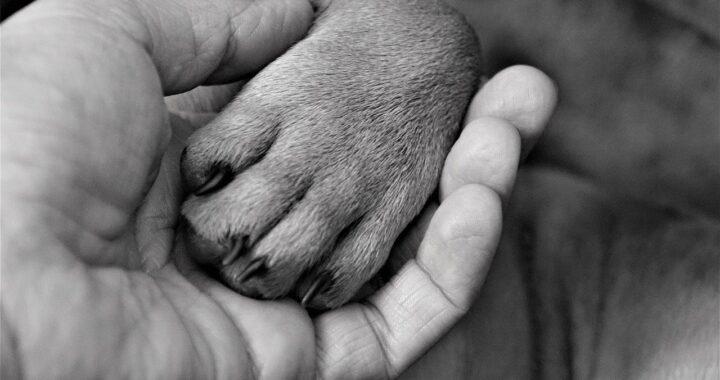 cane dal proprietario in punto di morte