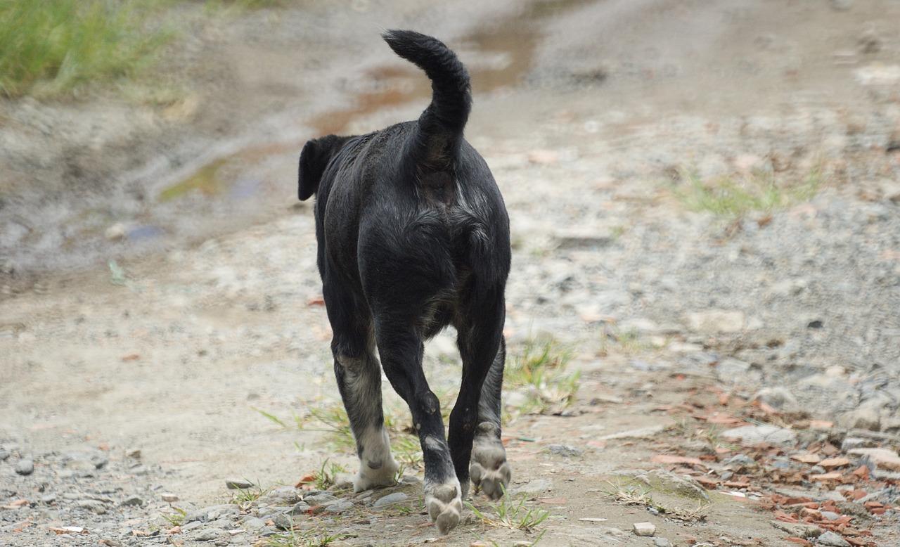 Cane ferito al naso