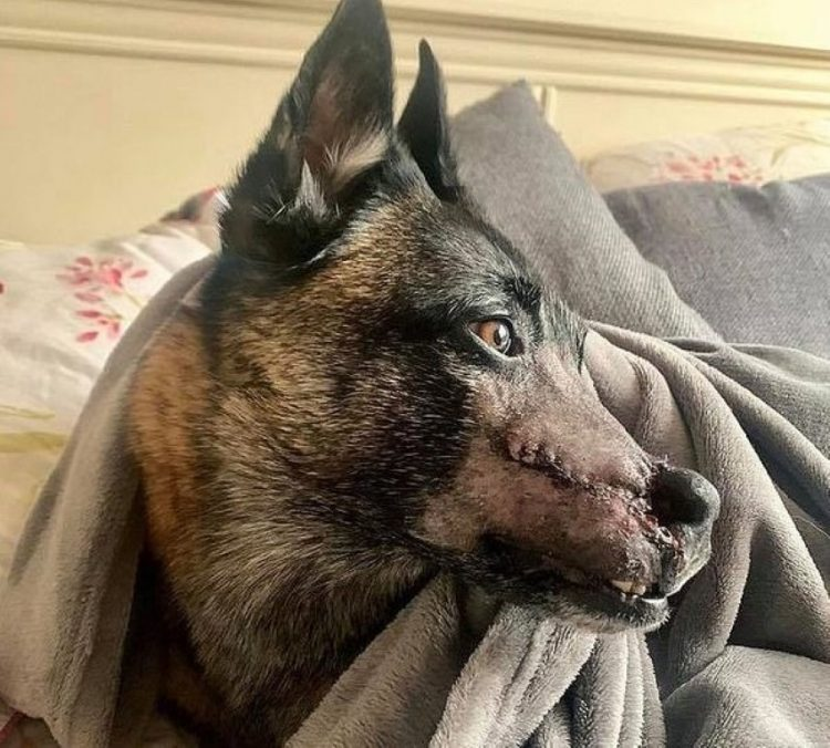 La ferita sul volto del cucciolo