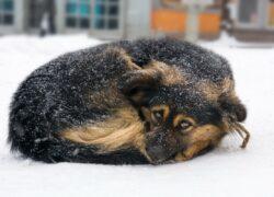 cane freddo polizia
